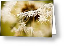 Dreamy Dandelion Greeting Card