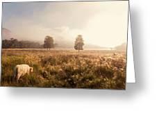 Dreamy Fields. The Trossachs. Scotland Greeting Card