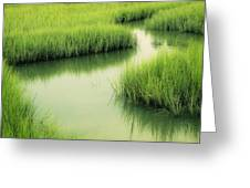 Dreamy Marshland Greeting Card