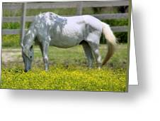 Dreamy Pony Greeting Card