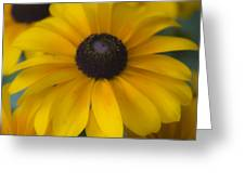 Dreamy Rudbeckia Squared Greeting Card