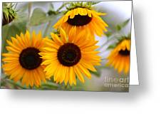 Dreamy Sunflower Day Greeting Card