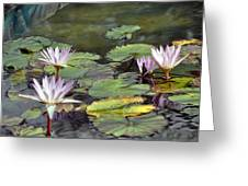 Dreamy  Water Lillies Greeting Card