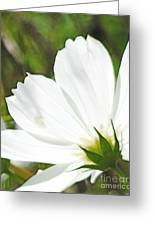 Dreamy White Cosmos Greeting Card