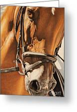 Dressage And Details Greeting Card