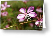 Dressed In Pink Greeting Card