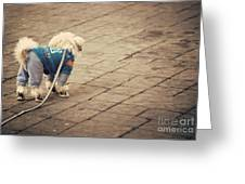 Dressed Up Dog Greeting Card