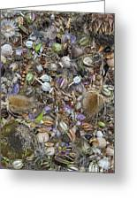 Dried Flower Seeds Greeting Card