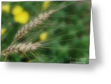 Dried Grass In Soft Focus Greeting Card