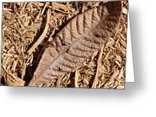 Dried Leaf Greeting Card