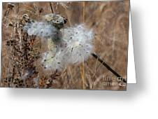 Dried Milk Weed  Greeting Card