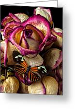 Dried Rose And Butterfly Greeting Card