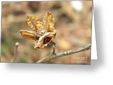 Dried Seed Greeting Card