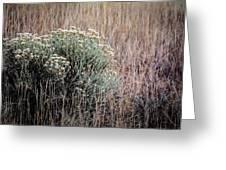 Dried Wildflowers Greeting Card