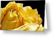 Dried Yellow Rose II Greeting Card