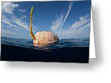 Drifting Coconut Greeting Card