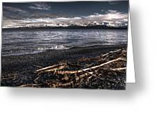 Driftwood At Land's End Greeting Card