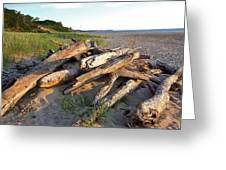 Driftwood At Sunset Greeting Card