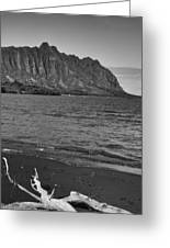 Driftwood-black And White Greeting Card
