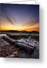 Driftwood Greeting Card by Mark Leader