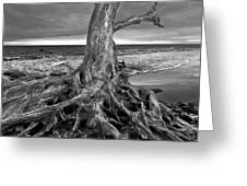 Driftwood On Jekyll Island Black And White Greeting Card