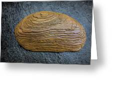 Driftwood On Slate Greeting Card