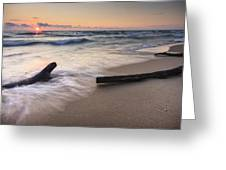 Driftwood On The Beach Greeting Card by Adam Romanowicz