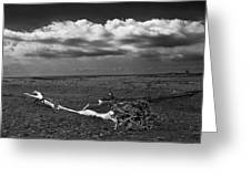 Driftwood On The Beach At Whitefish Point Greeting Card