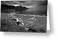 Driftwood On The Shore Near Wawa Ontario Canada Greeting Card