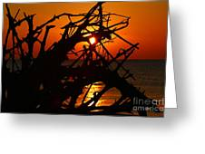 Driftwood Tangle Greeting Card