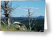 Gnarled Trees And Divide Mountain Greeting Card