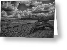 Driftwood V4 Greeting Card