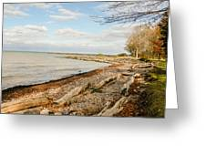 Driftwood On Shore Greeting Card