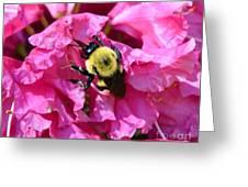 Drinking Nectar Greeting Card
