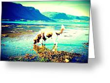 Springer Spaniel Drinking Water From The Big Blue Sea  Greeting Card