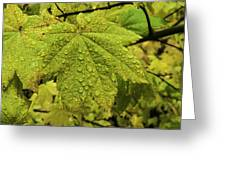Dripping Vine Maple Greeting Card