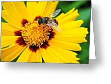Drone Bee Greeting Card