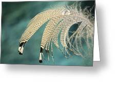 Droopy Feather Greeting Card