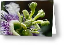 Drop Of Passion Greeting Card