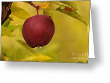 Droplets From A Red Apple   Greeting Card