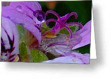 Droplets In Pink Greeting Card