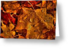 Droplets Of Autumn Greeting Card