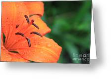Droplets On Tiger Lily Greeting Card