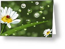 Drops Of Spring Greeting Card