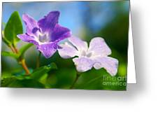 Drops On Violets Greeting Card by Carlos Caetano