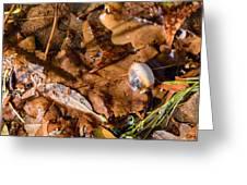 Dry Acorn And Oak Leaves Greeting Card