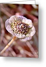 Dry Bloom Greeting Card