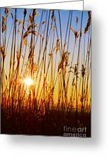 Dry Cane Greeting Card