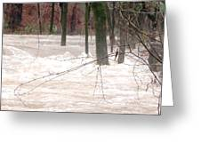 Dry Creek-but Swift Waters Greeting Card