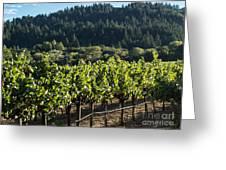 Dry Creek Road Vineyard Greeting Card